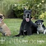 Milo-Roxy-Lucky2