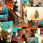 Daniel-cats